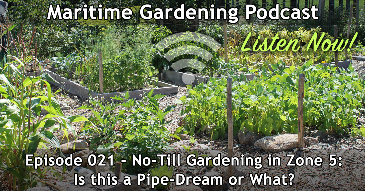 No-Till Gardening in Zone 5: Is this a Pipe-Dream or What?