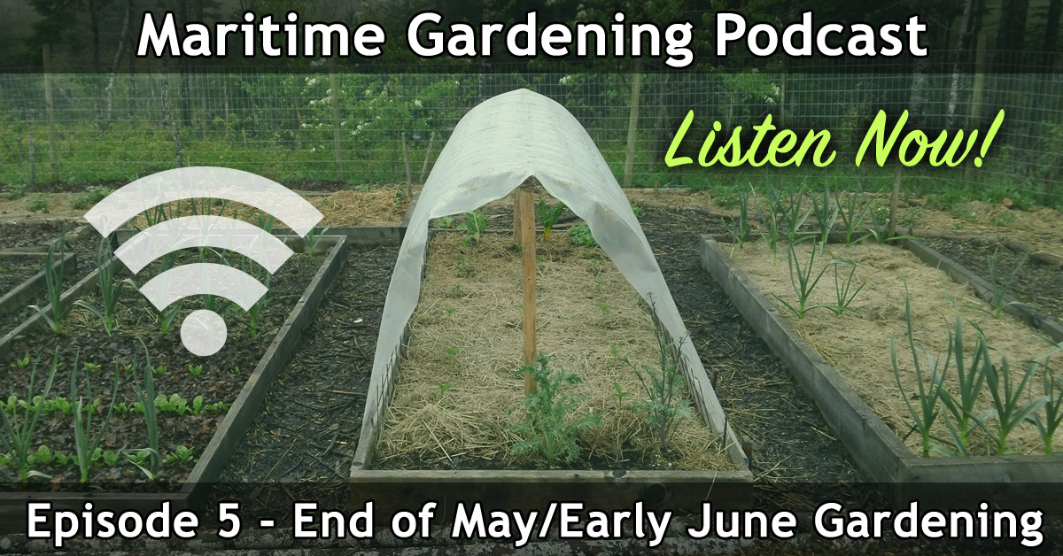 End of May/Early June Vegetable Gardening Podcast