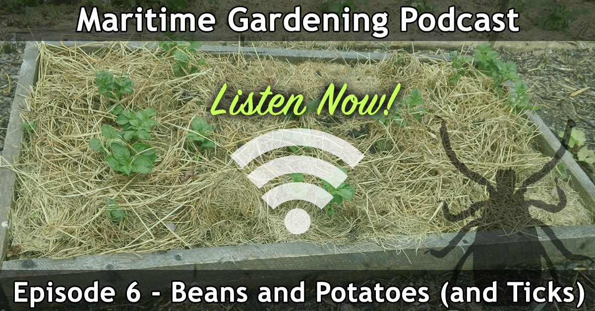 Beans and Potatoes - Maritime Gardening Podcast Episode 006