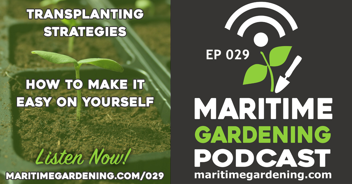 Ep 29: Transplanting Strategies - How To Make It Easy On yourself