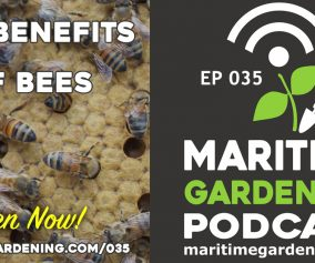 The Benefits of Bees - Gardening Podcast