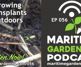 56: Growing Transplants Outdoors