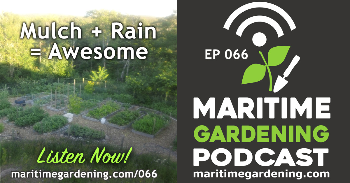 MG066 - Mulch + Rain Episode