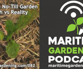 Episode 82 - Pests in a No-Till Garden - Myth vs Reality