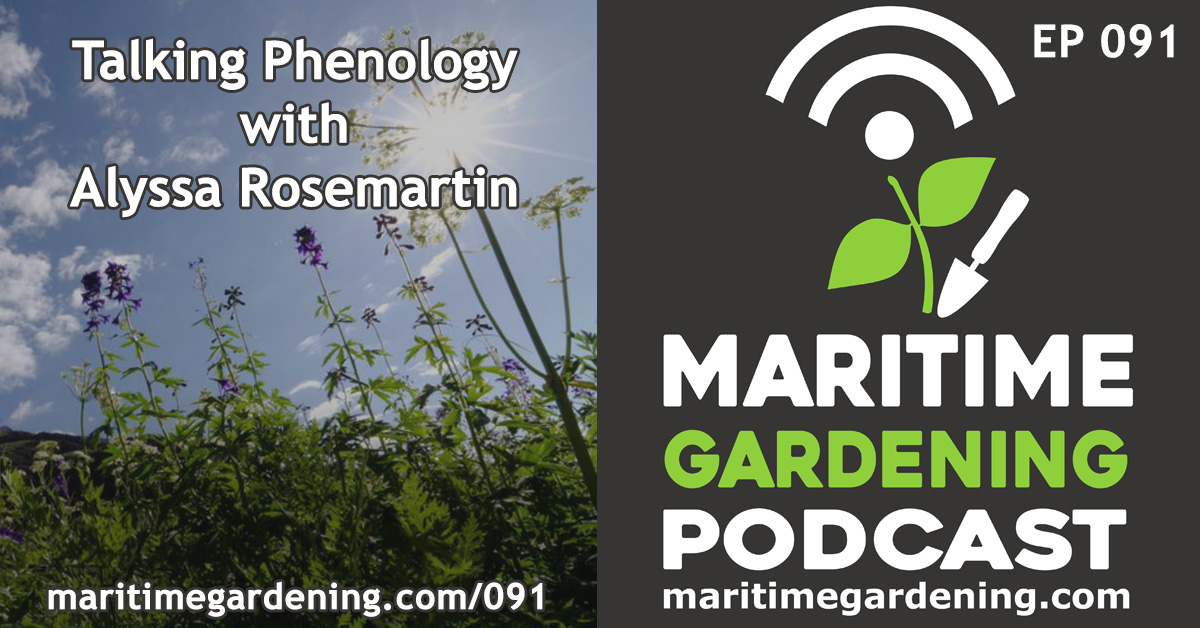 Episode 91 - Talking Phenology with Alyssa Rosemartin