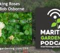 Talking Roses with Bob Osborne on The Maritime Gardening Podcast