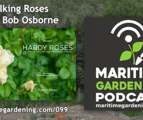 Talking Roses with Bob Osborne on The Maritime Gardening Podcast