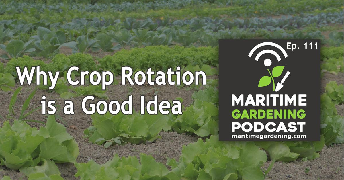 Why Crop Rotation is a Good Idea